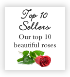 Top 10 Sellers - Our Top 10 beautiful roses